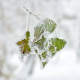 Frozen trees outdoor in winter Royalty Free Stock Image