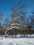 Frozen trees in the park. Winter day. Stock Photos