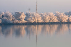 Frozen trees reflected in the river. The early light of the winter sun lights some completely white frozen trees along a dutch river Stock Images