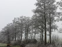 Frozen trees on the side of the road near a car stop and a bench on a freezing morning in netherlands royalty free stock photography