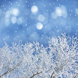 Frozen trees and snow Royalty Free Stock Images