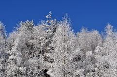 Frozen on trees Stock Photo