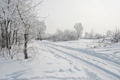 Frozen trees at snowy field. Beautiful winter road running along the snow-covered field Royalty Free Stock Images