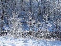Frozen trees Royalty Free Stock Image
