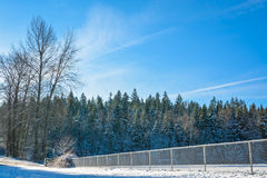Frozen trees on sunny day. Winter trees in snow with spot field and fence in front Royalty Free Stock Photography