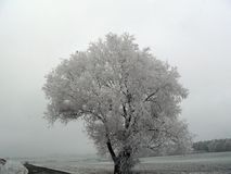 frozen trees Royalty Free Stock Photography