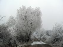 Frozen trees. View on the frozen trees in a forest in the Czech Republic Stock Photos