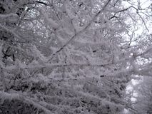 Frozen trees. View on the frozen trees in a forest in the Czech Republic Stock Photo