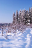 Frozen trees in the winter. Forest royalty free stock photography