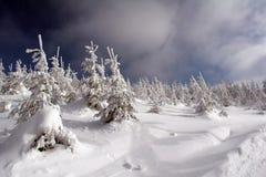 Frozen trees in winter Stock Images