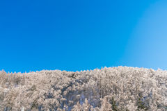 Frozen trees in winter with blue sky. Royalty Free Stock Photos