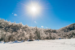 Frozen trees in winter with blue sky. Royalty Free Stock Images
