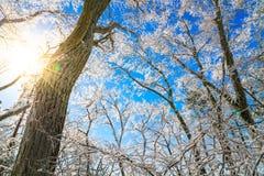 Frozen trees in winter Stock Image