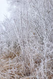 Frozen trees. Winter landscape, frozen trees covered with white hoarfrost Stock Images