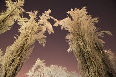 Frozen trees winter night stars Royalty Free Stock Photos