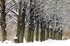 Frozen trees in winter park Royalty Free Stock Photography