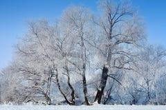 Frozen trees in winter Stock Photos