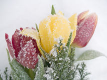 Frozen Tulips Royalty Free Stock Images