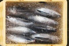 Frozen Tuna Fish stock photos