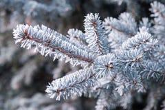 Frozen twig background Stock Image