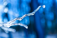 Frozen twig background Royalty Free Stock Photography
