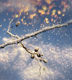 Frozen twig colorful snowfall, winter season concept. Frozen tree branch twig with colourful flakes snowfall season concept stock photography