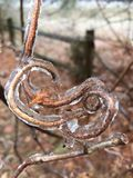 Frozen twig Stock Photography