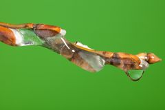 Frozen twig with melting ice Royalty Free Stock Photos