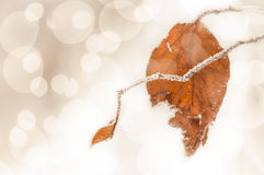 Frozen twig Royalty Free Stock Images