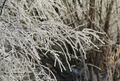 Frozen twigs Stock Photography
