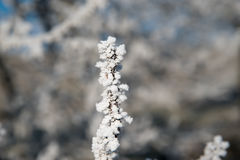 Frozen twigs Royalty Free Stock Photography