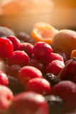 Frozen Variety of Fruits Royalty Free Stock Photos