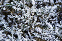 Frozen vegetation Stock Photos