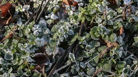 FROZEN VEGETATION. View of frozen vegetation during the winter Stock Photography