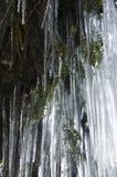 Frozen Veil of Ferns Stock Photos