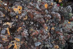 Frozen volcanic colrful red lava closeup thousands of years after the eruption Stock Photo