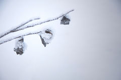 Frozen water on a branch. A frozen water on a branch of a monochrome background Stock Images