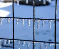 Frozen water drops. On the fence Stock Images