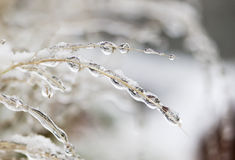 Frozen water drops. Frozen drops of water on a grass Royalty Free Stock Image