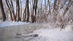 Frozen Water Flow in Forest. Sunny winter day shot of frozen water flow in tree forest stock video