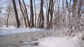 Frozen Water Flow in Forest. Sunny winter day shot of frozen water flow in tree forest stock footage