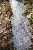 Frozen water puddle in autumn forest stock photo