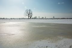 Frozen water and snow in the meadow, lonely tree on the horizon and cloudless sky. View in sunny winter day royalty free stock photos