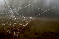 Frozen Web. Frozen spider web with blured forest background Stock Photography