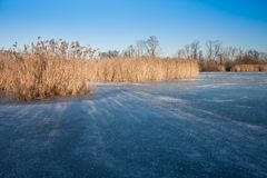 Frozen wetland with golden reed Stock Image