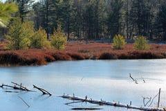 Frozen wetlands Stock Photography
