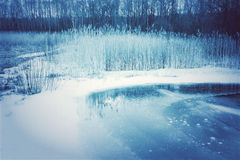 Frozen wetlands in winter Royalty Free Stock Images