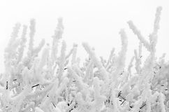 Frozen white branches Royalty Free Stock Photos