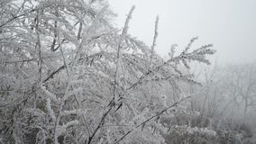 Frozen white branches. Forest landscape. stock video footage