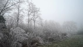 Frozen white branches. Forest landscape. Winter season stock video footage